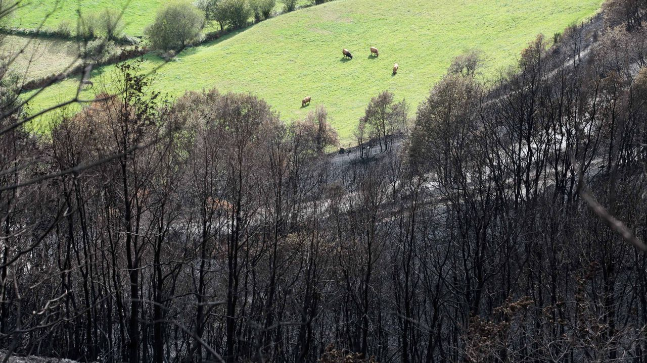 Terreno quemado en Cervantes, dentro de la comarca de Os Ancares, en los incendios del 2017