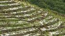 Una granizada arrasa cultivos en Chantada