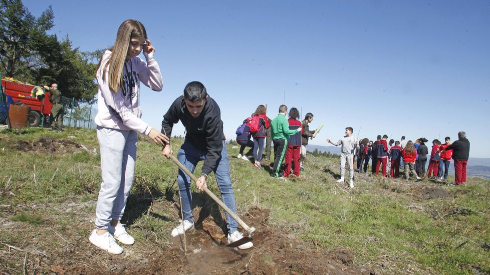 Os estudantes plantaron freixos, cerdeiras e castiñeiros nos arredores da base contraincendios do monte Marroxo