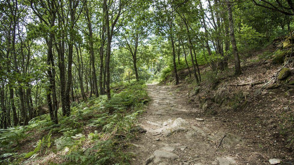 El camino discurre a través de una zona boscosa