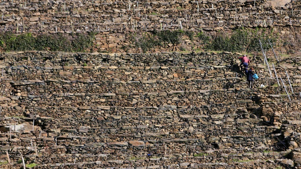 Viñedos en bancales en la ribera de Doade, una de las elegidas para los talleres sobre construcción de muros