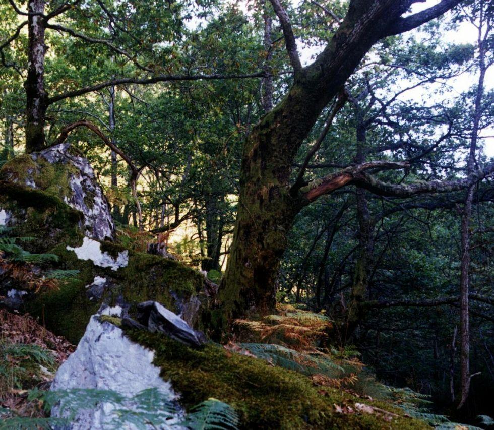 Un recorrido por la cueva de Tara en imágenes.El bosque alberga numerosas especies de árboles
