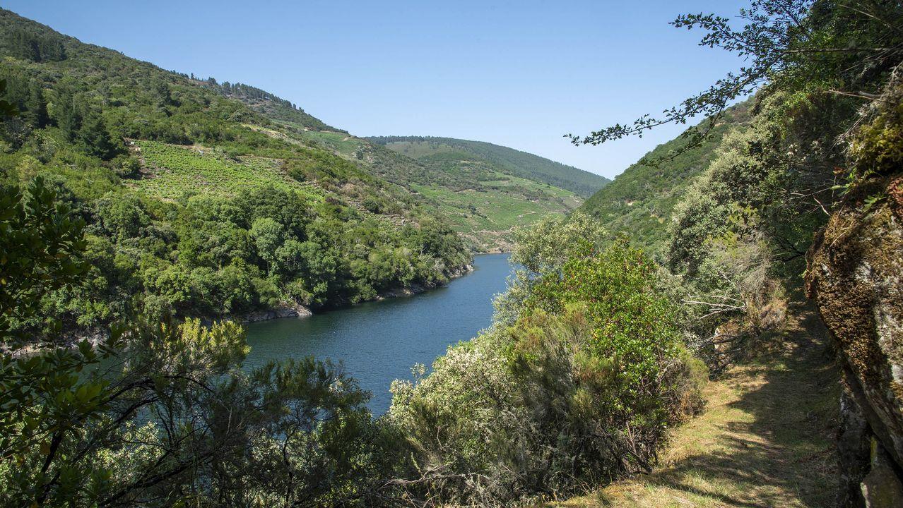 Otra vista del Sil en un tramo del camino. A la izquierda, las riberas de Vilachá, en el municipio de A Pobra do Brollón
