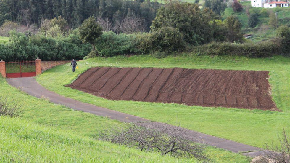 Los ganaderos asturianos se concentran en Oviedo.Terreno recién sembrado de patatas, entre Montiana y Poago