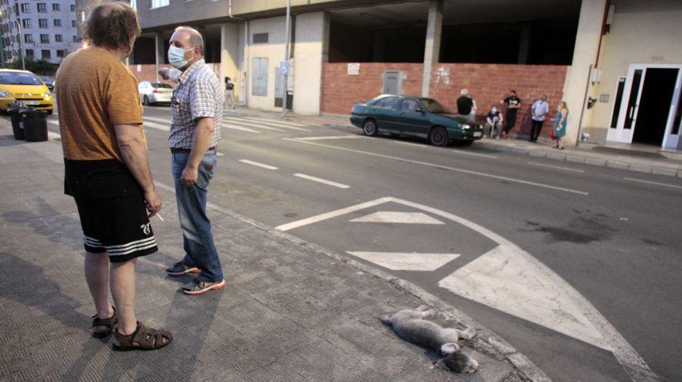 Dos vecinos comentan lo sucedido cerca del paso de cebra y junto al cuerpo del perro muerto en el atropello