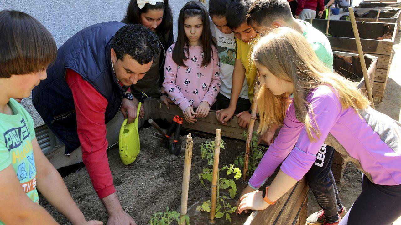 Huerto urbano en el CEIP Mondariz. La FAO ha declarado el 2020 Año Internacional de la Sanidad Vegetal