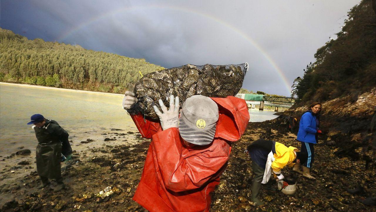 Marisqueo heroico. As mariscadoras do Vicedo extraen ostra na beira lucense da desembocadura do río Sor en condicións moi duras
