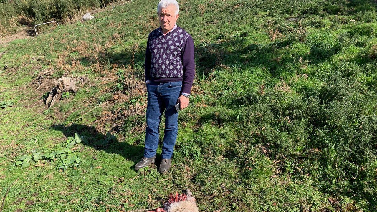 Vecino de A Espenuca afectado por los ataques de los lobos.En la imagen se ven las sujecciones del banco