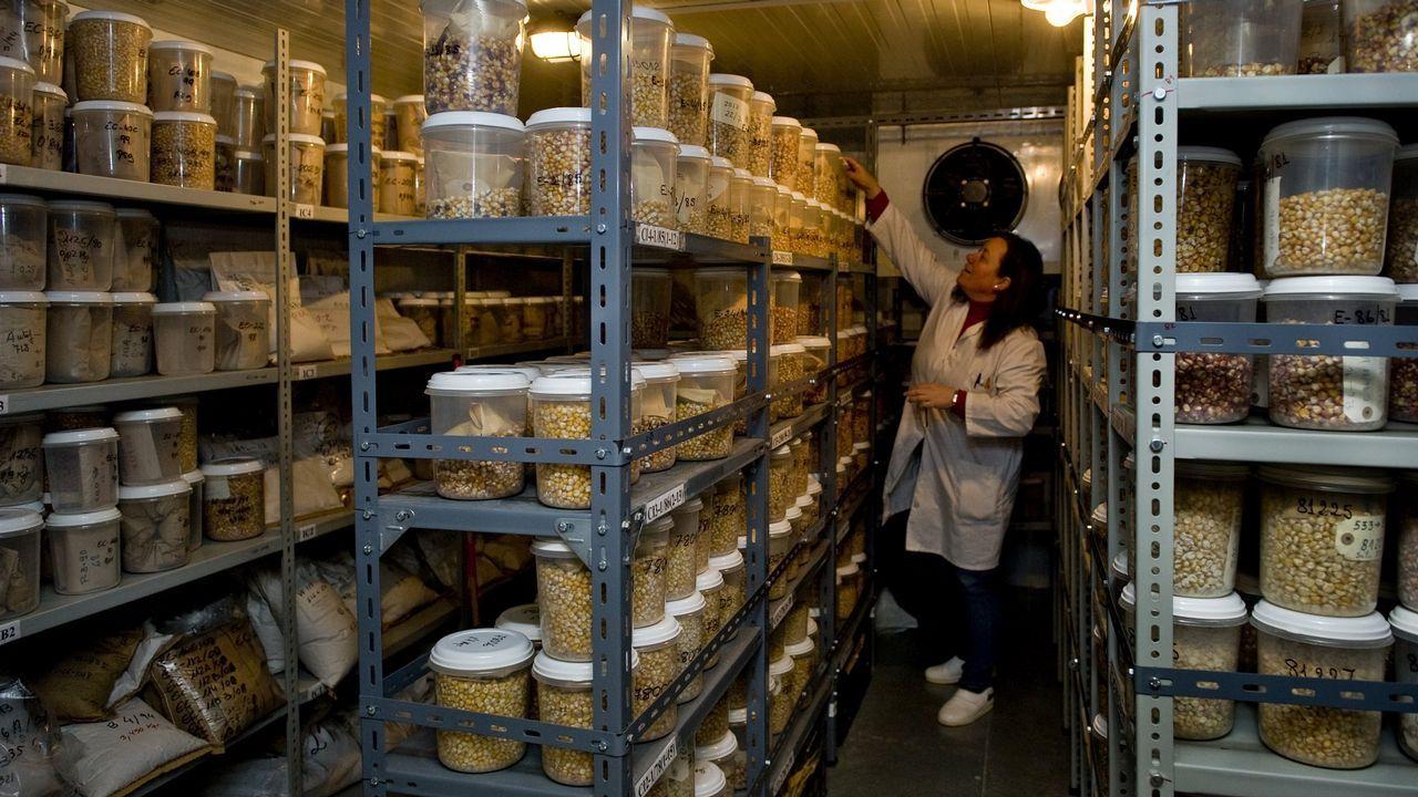 Los elegidos por los camioneros.En Galicia, el banco de germoplasma de Mabegondo, contribuye a recuperar alimentos autóctonos