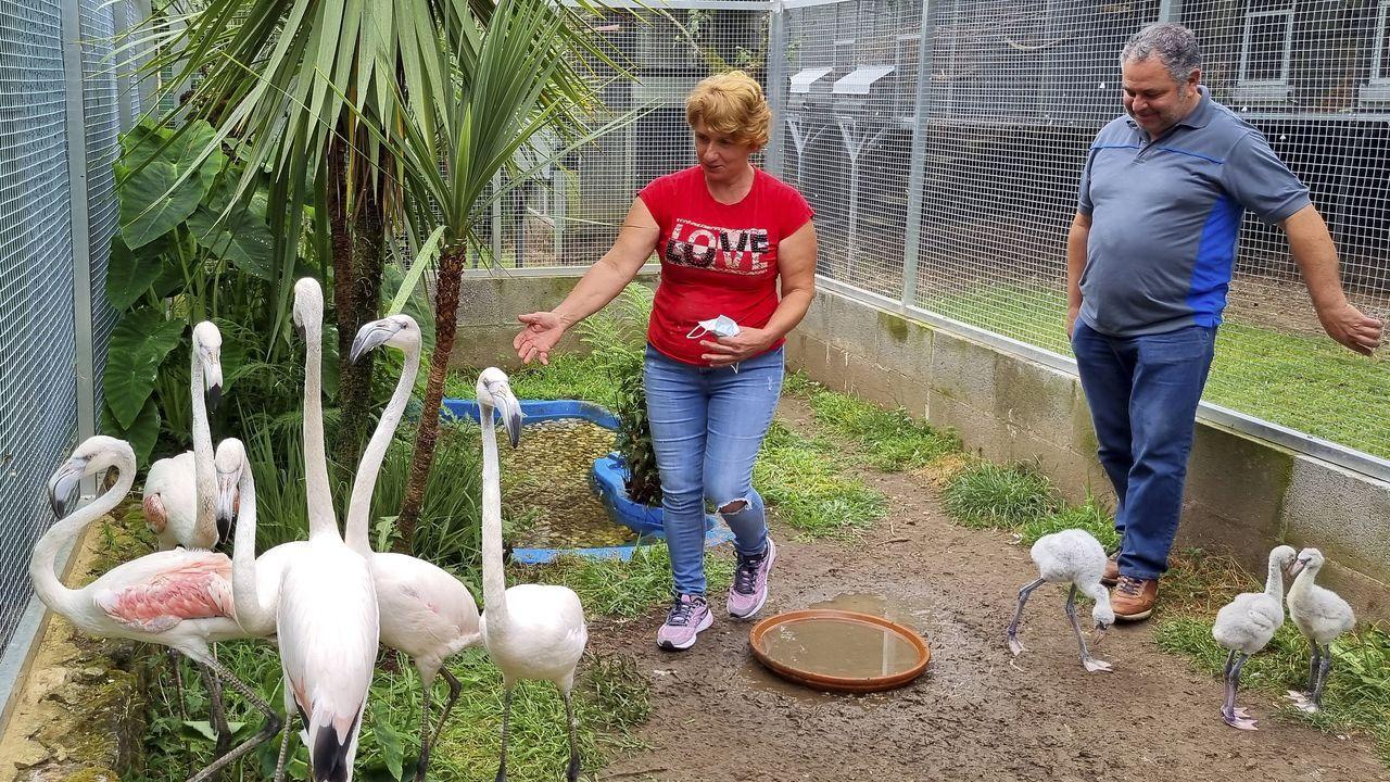 José Carlos y su mujer Rosa cuidan de las aves en su propiedad