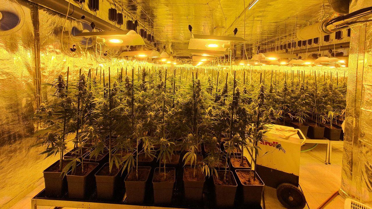 Descubren una gran plantación de marihuana en Barreiros.Ocho municipios del centro de Asturias siguen en  riesgo extremo  de incendio forestal por la contaminación