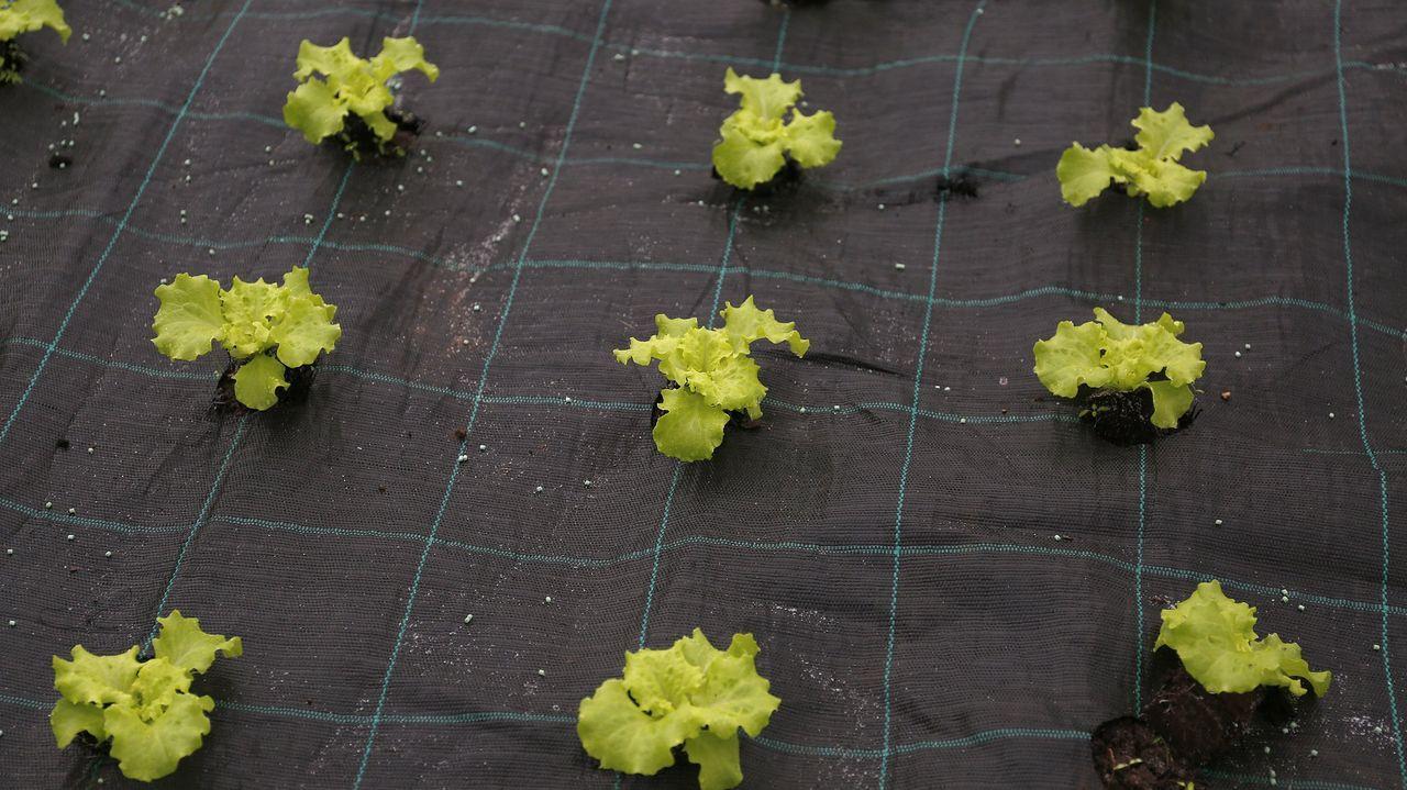 La descarga del Key Discovery en el muelle del Centenario de A Coruña.Invernadero de lechugas. Imagen de archivo