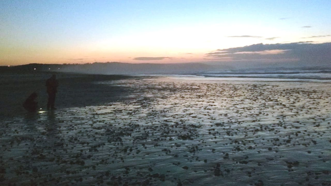 Millones de pequeños crustáceos cubren las playas del occidente