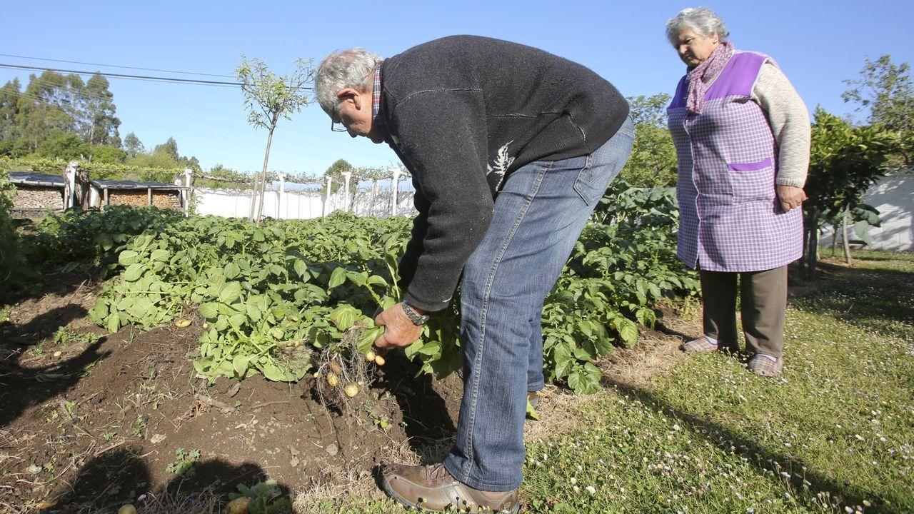 Medio Rural obligó a levantar las plantaciones en la primavera de 2017 (en la imagen, en Cabanas)