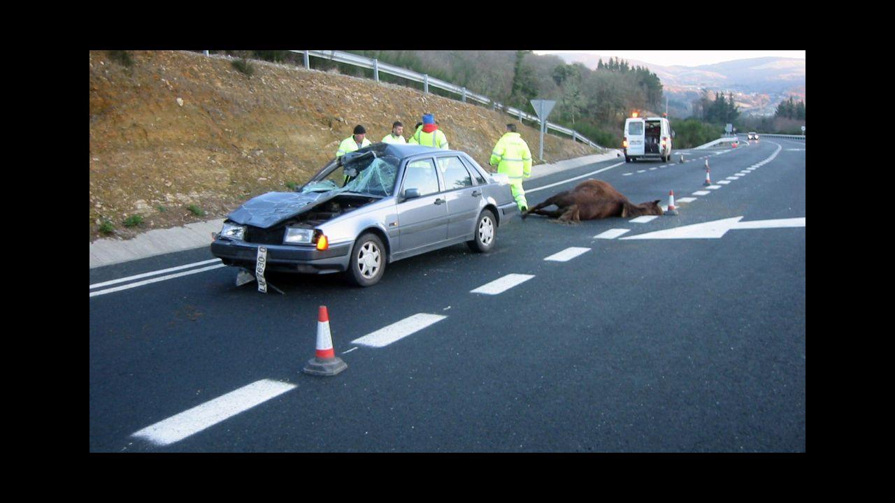 «Se registran frecuentemente accidentes como consecuencia del paso de animales», dice la Xunta en la licitación de la mejora de la seguridad vial en A Gañidoira