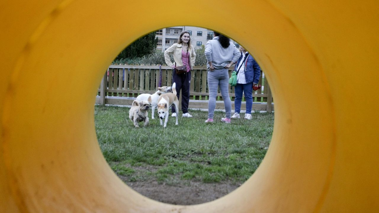 Un grupo de personas juega con sus perros en un parque