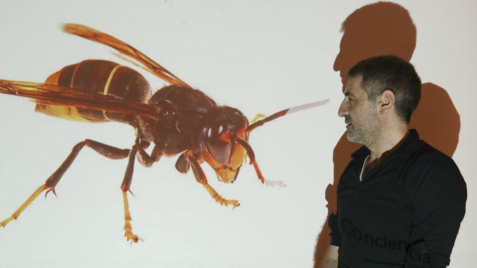 Contenedores de reciclaje en Gijón.O biólogo Rodríguez Lado presentou a súa plataforma nun encontro do Consello da Cultura.