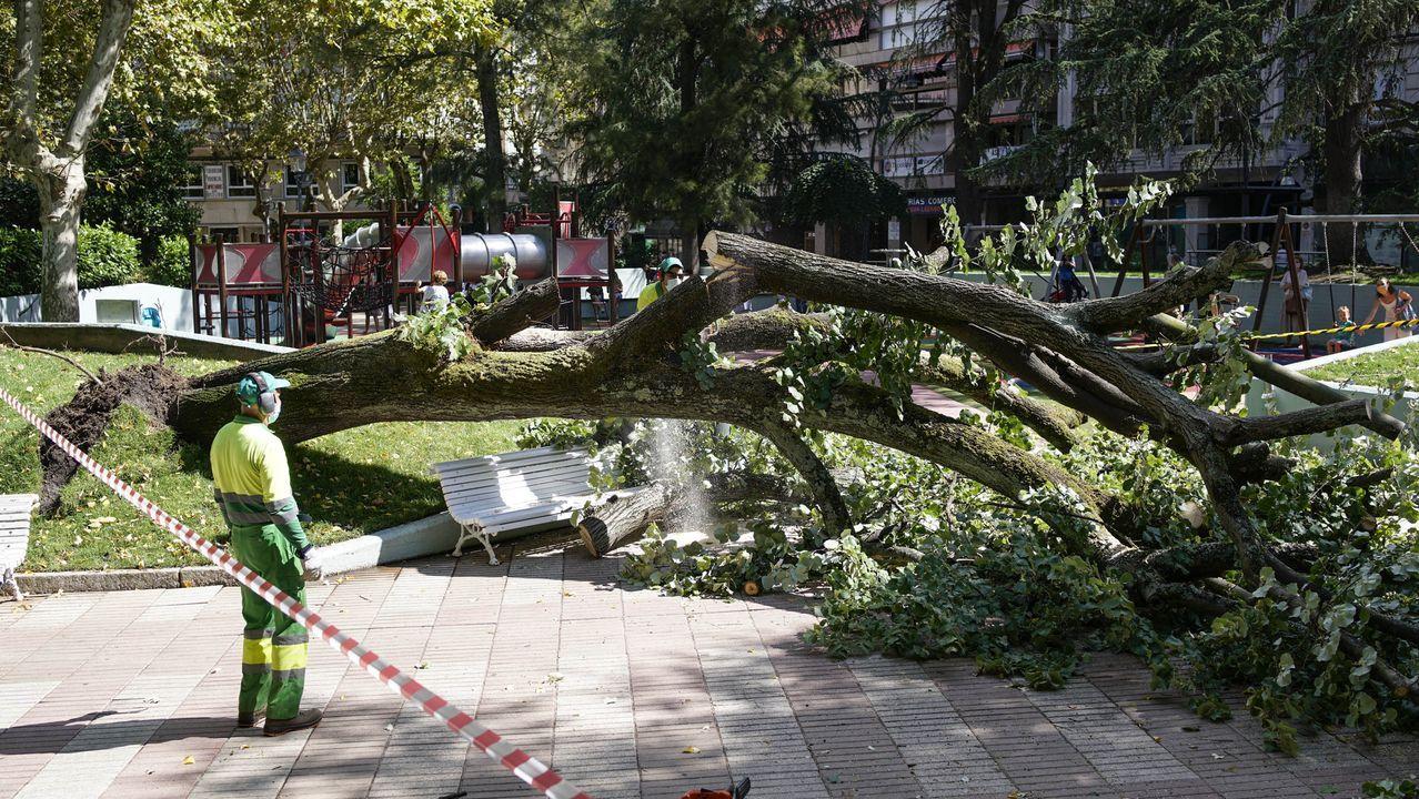Poda en las palmeras del parque de Via Norte.Un árbol cayó este jueves junto a la zona de juegos infantil del parque de San Lázaro