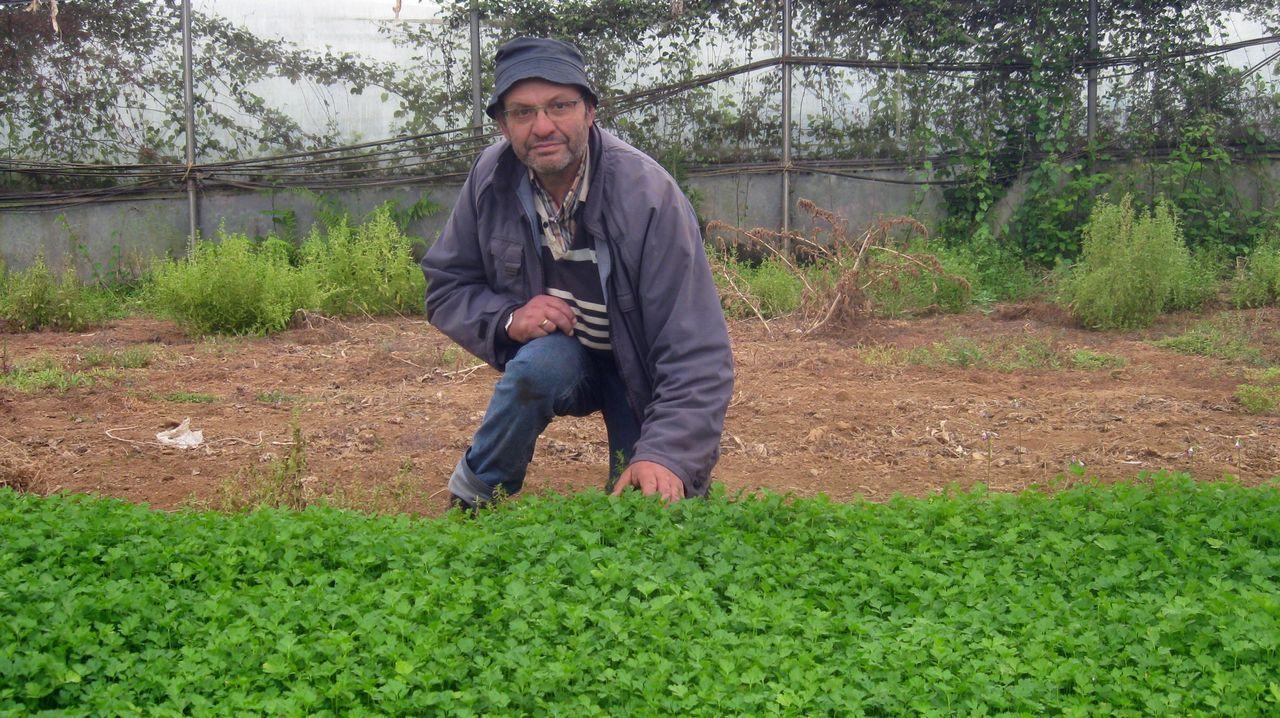 José Manuel Fraga cultiva perejil en Mondoñedo