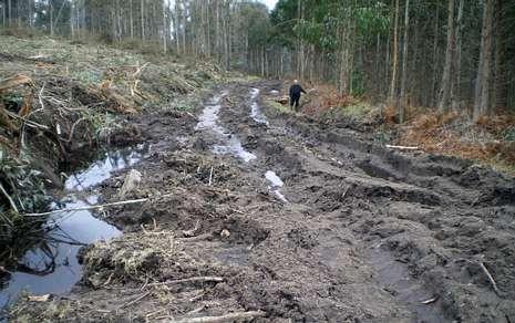 Varias pistas forestales en la parroquia de Feás son intransitables tras el paso de las máquinas