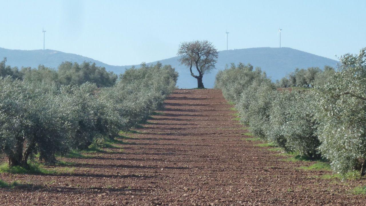 Las imágenes del 8M en Galicia