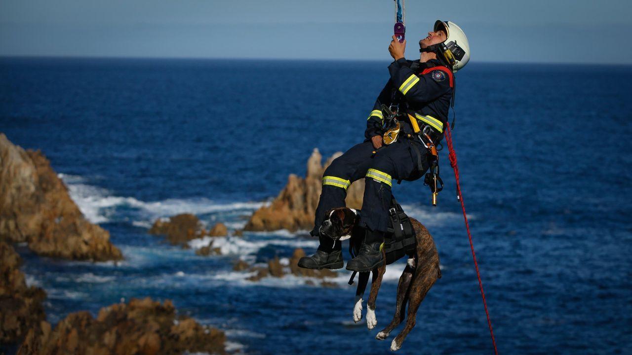 Rescate canino en Punta Herminia.