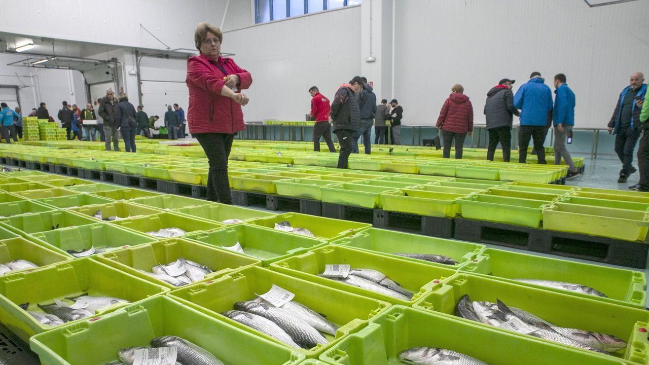 Imagen de archivo de una subasta de merluza del pincho en Celeiro; en primer plano, ejemplares que se enviaron para la boda de Marta Ortega