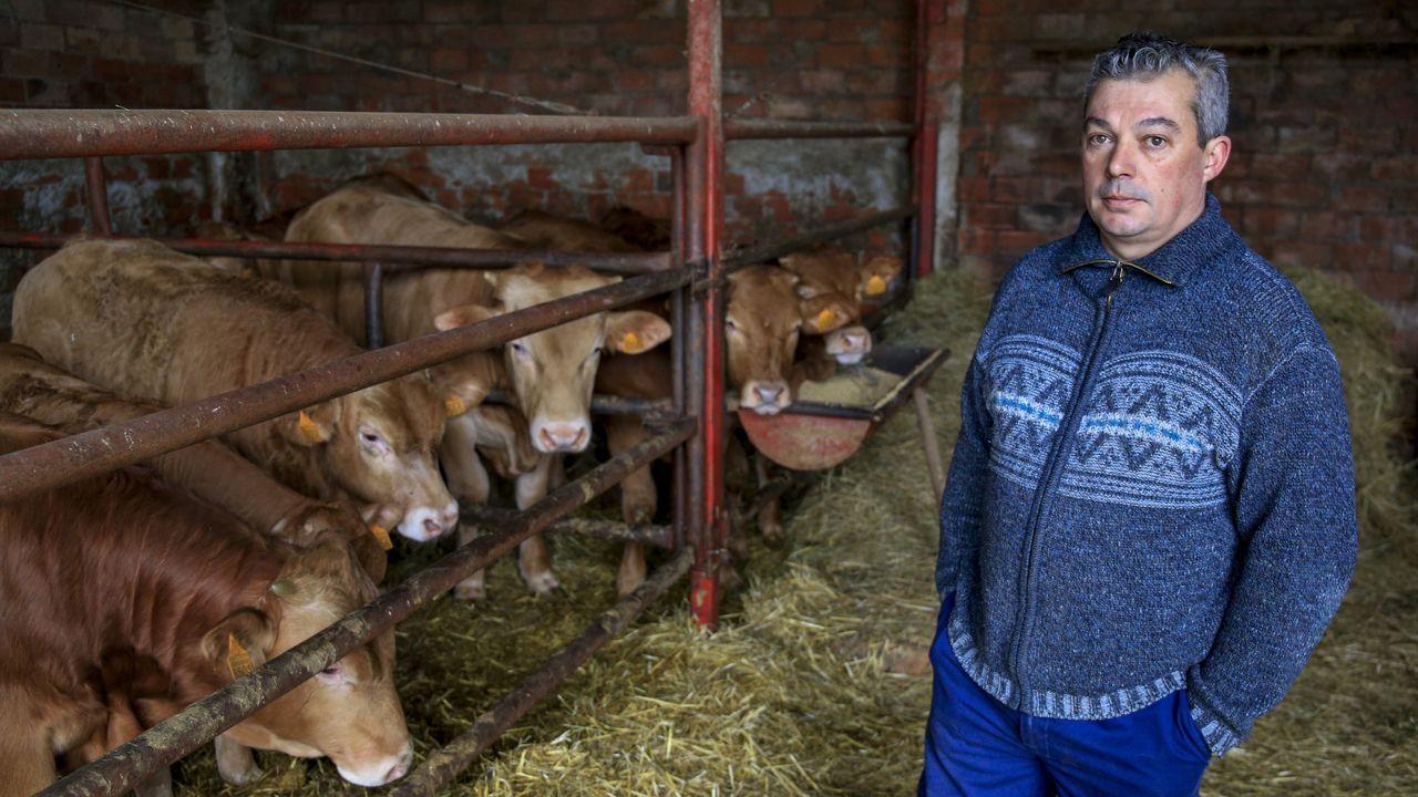 Javier López, ganadero de Barbadelo, en Sarria, explica cómo el cierre hostelero le pilló con mucho ganado para sacrificar