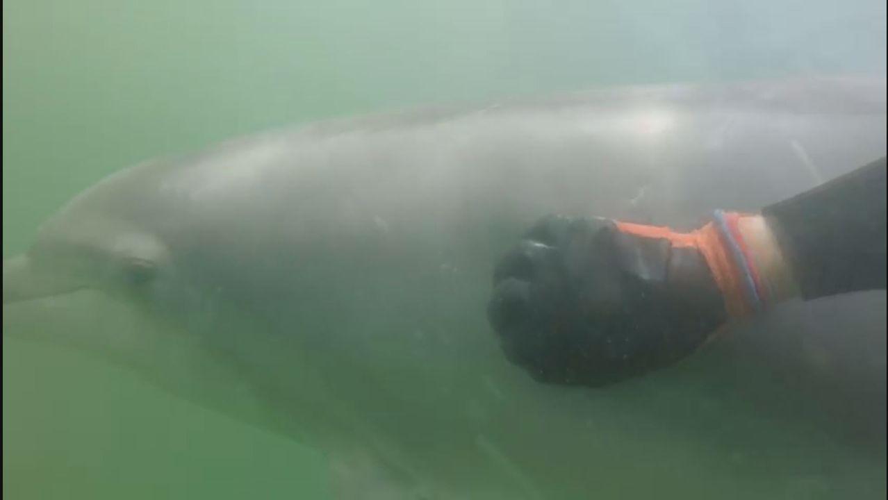 Manoliño y Roger sellan su amistad debajo del mar.Entrada de las urgencias del CHUS