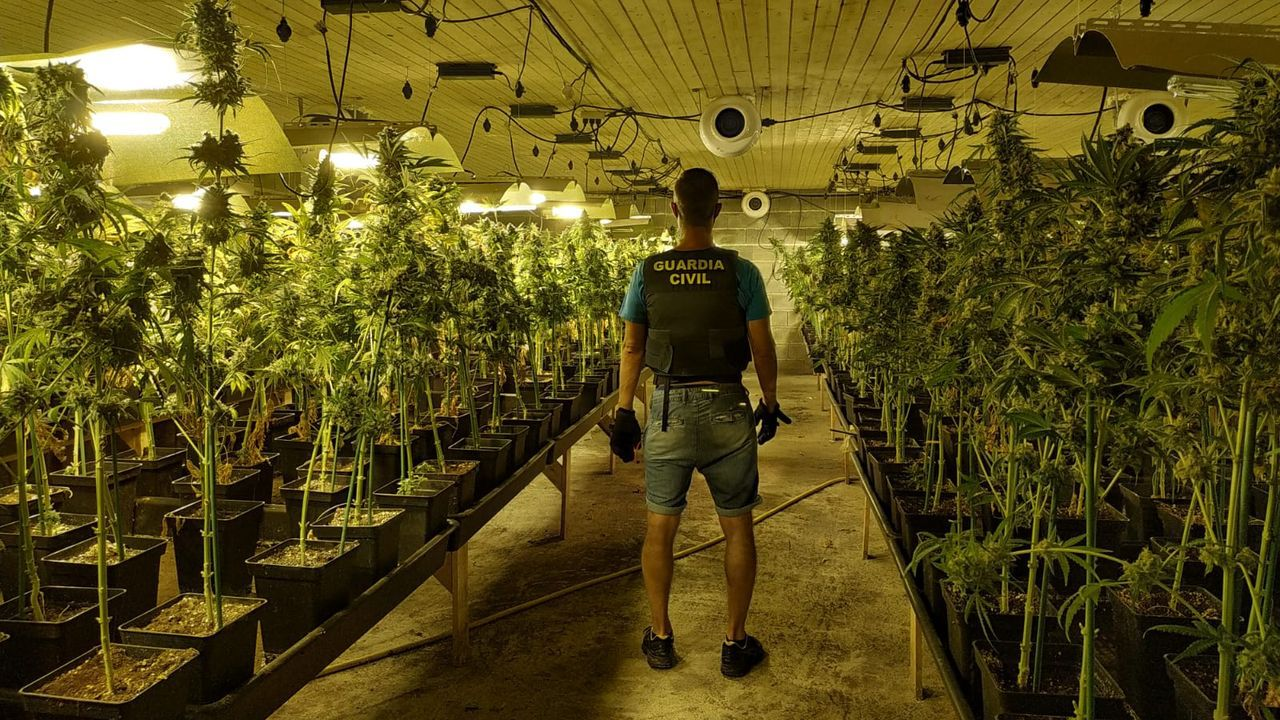 Imagen de archivo de la Guardia Civil tras descubrir una plantación de marihuana