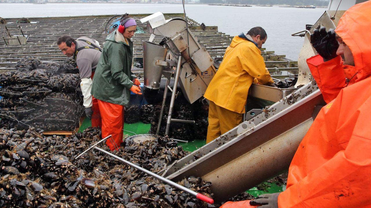 Imagen de archivo de una batea de mejillón en la ría de Arousa, una de las 3.373 registradas en Galicia, según la Consellería do Mar