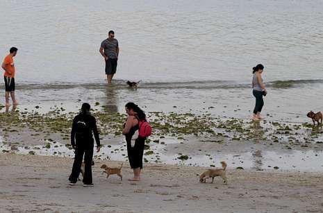 El arenal de Toralla se destinó a los perros por primera vez el verano pasado y ahora repite.