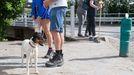 Un perro junto a varios peregrinos, en Portomarín