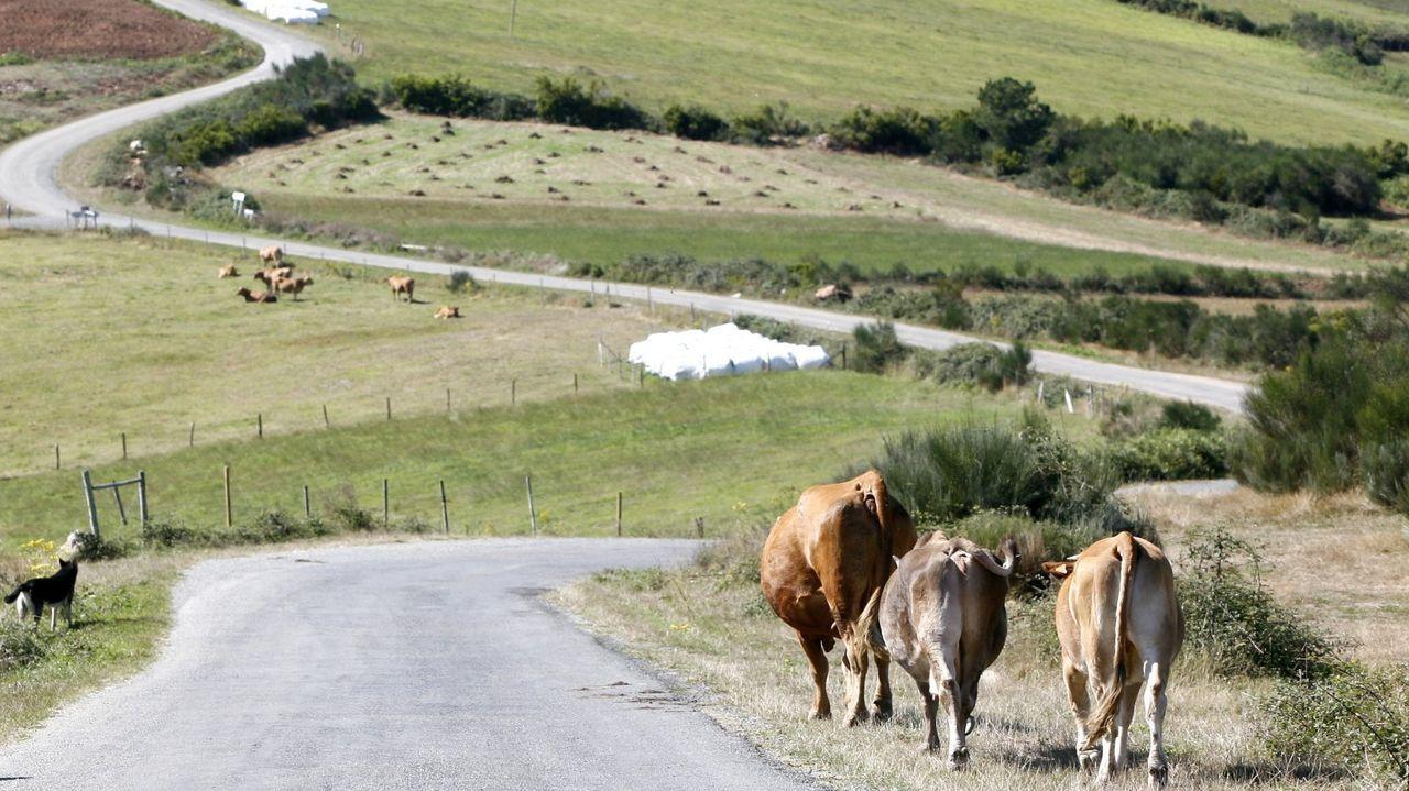 Navia de Suarna es uno de los municipios donde se dispone ahora de más pasto