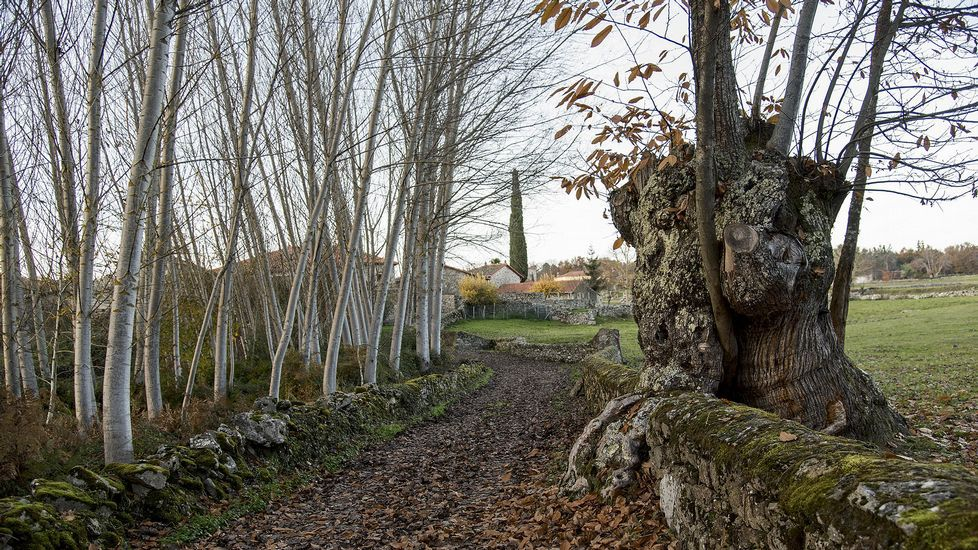 Un tramo del Camiño da Ribeira cerca de la aldea de Lamas de Brosmos