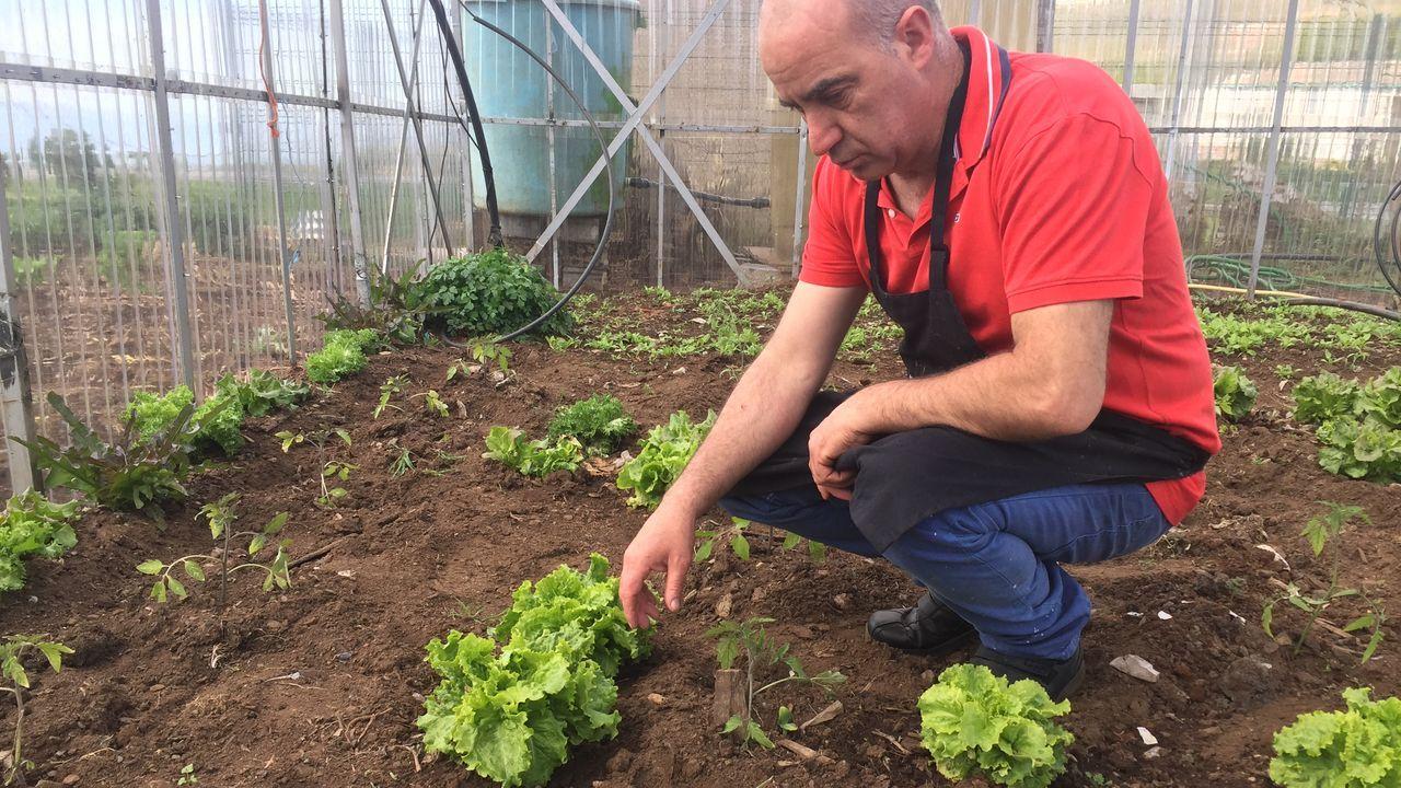 José Luis tiene lechugas y tomartes certificados por el Craega como de agricultura ecológica