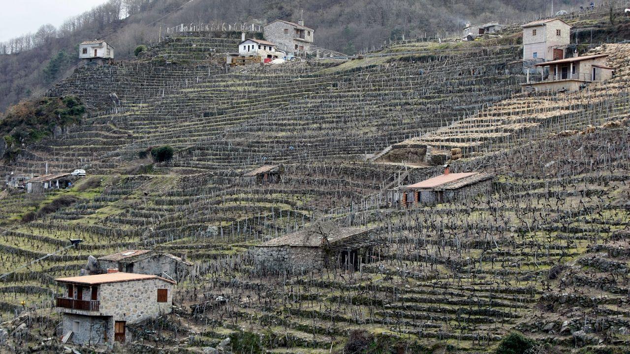 Construcciones en las laderas plantadas de viñas de San Fiz de Asma