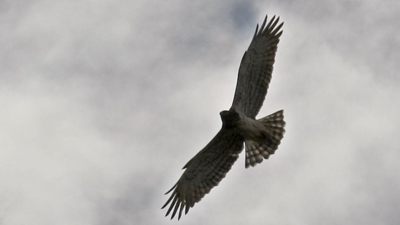 Turismo ornitológico en elcañón del Sil