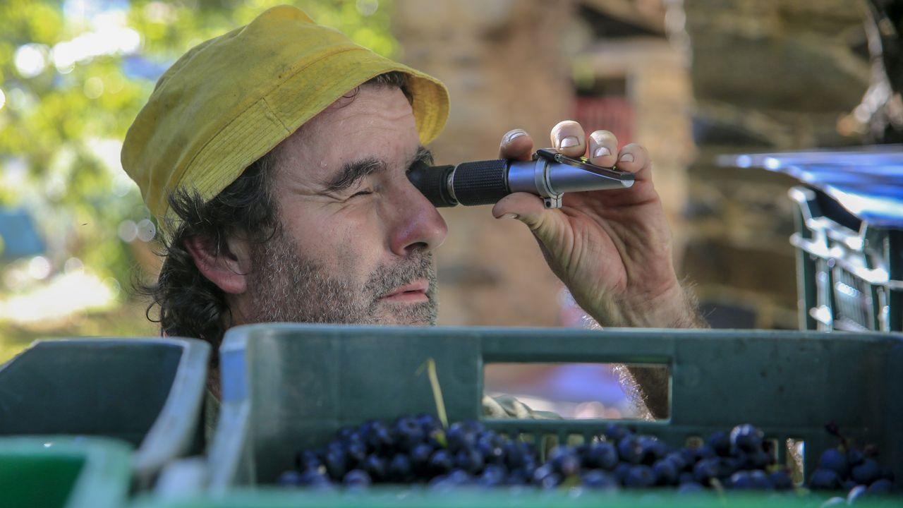 Primitivo Lareu comprueba con un refractómetro la concentración de azúcar de la uva
