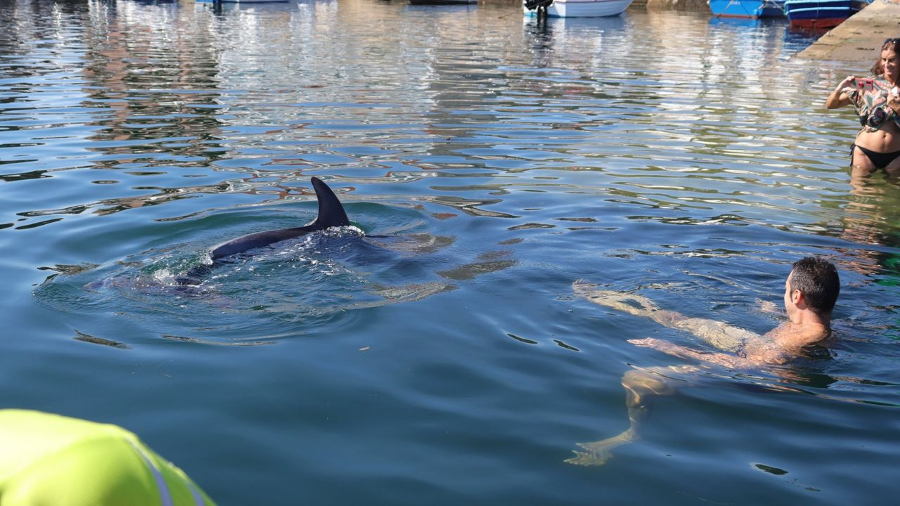 Los mejores paseos y sendas de Barbanza para caminar junto al mar.Manoliño, o golfiño rebuldeiro que vive na ría de Muros-Noia