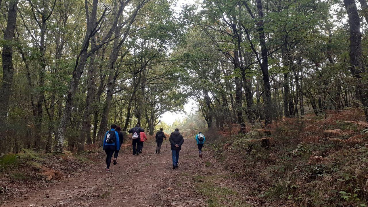 oza.Un recorrido guiado por un bosque del municipio de Taboada, una de las pocas actividades que se pudieron realizar este año en la campaña de turismo de otoño organizada por el consorcio