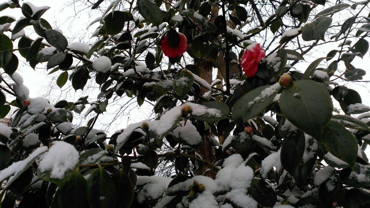 Nieve en Oviedo.Un pequeño muñeco de nieve en la fuente de la Escandalera