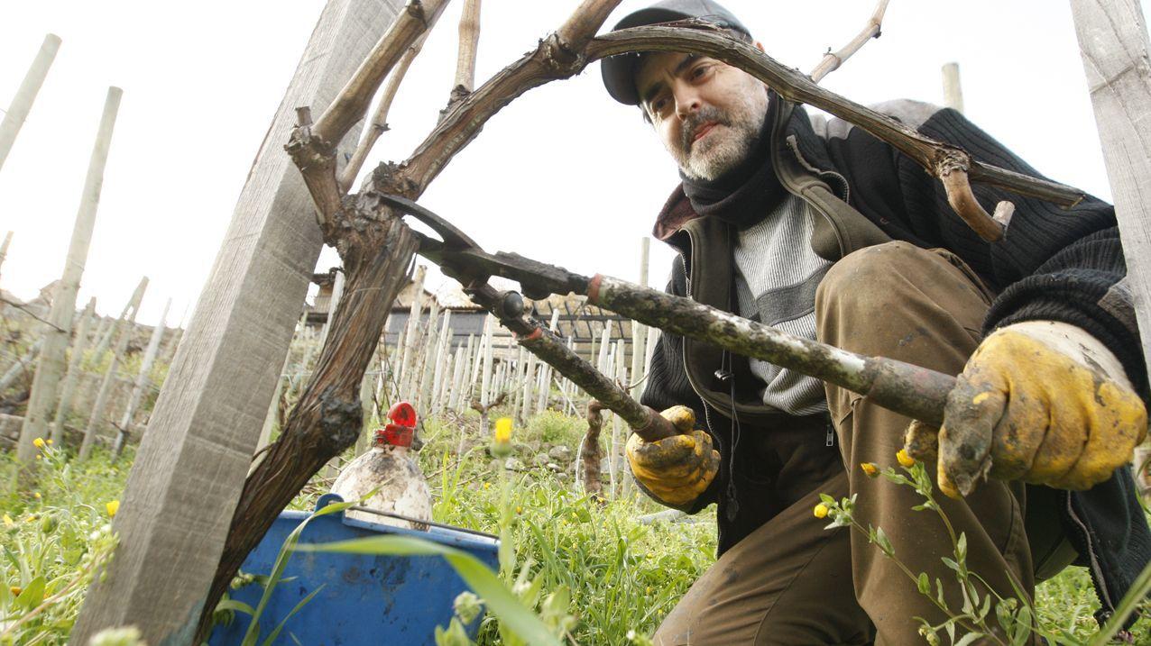 De poda por las viñas de la ribera de Chantada.Miguel Pérez Dubois, director xeral de Desenvolvemento Rural