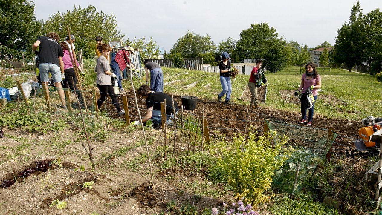 Imagen de archivo de un grupo de jóvenes trabajando la huerta