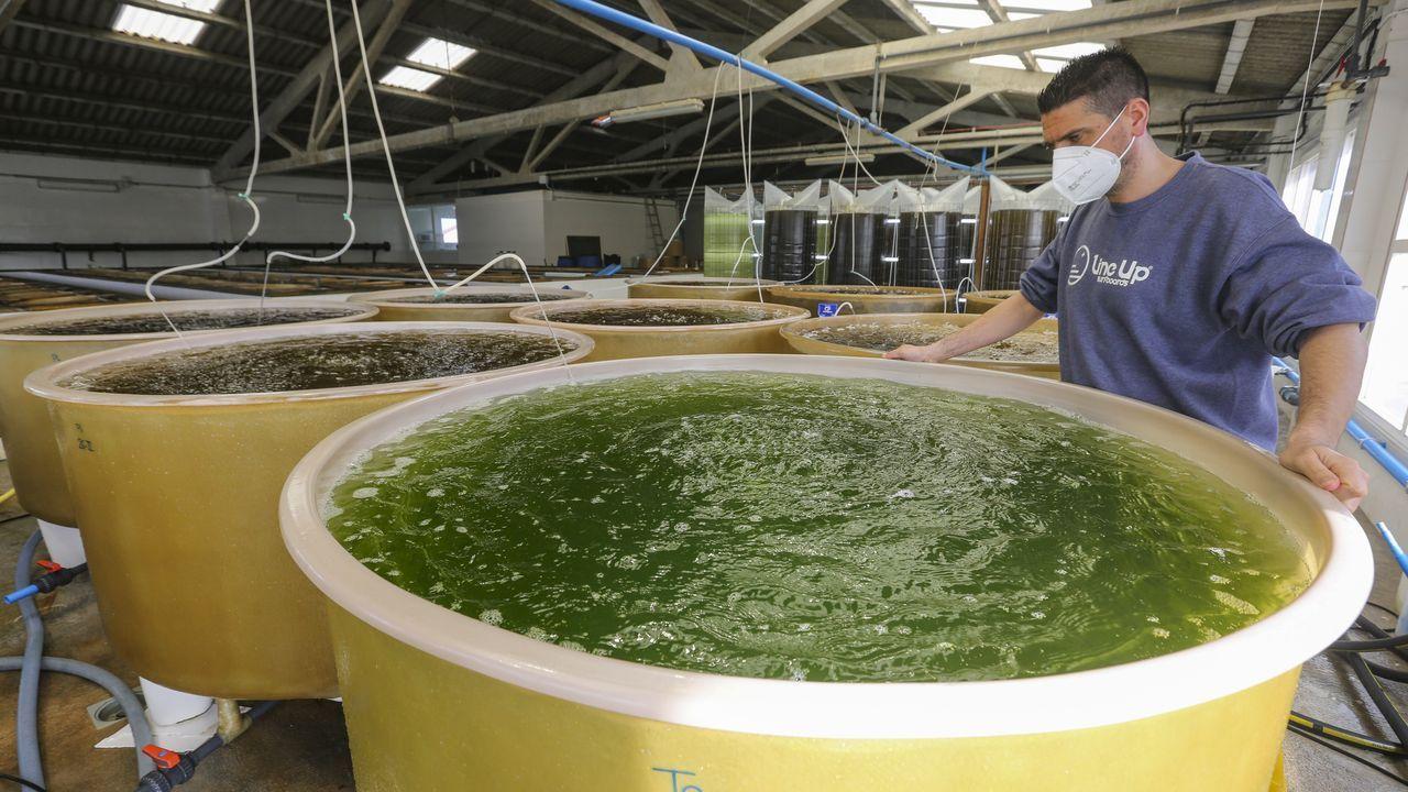 A Ostreira produce almeja autóctona en Malpica