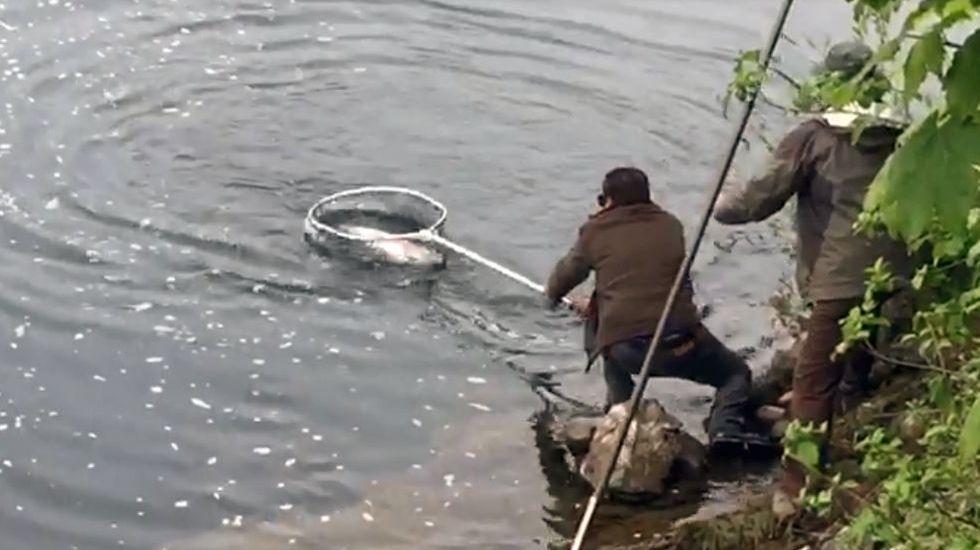 Un grupo de pescadores recoge el «campanu» del Sella, el segundo del día, capturado por Juan Antonio González, el «sastrín», en el Barcu de Arriondas..Un grupo de pescadores recoge el «campanu» del Sella, el segundo del día, capturado por Juan Antonio González, el «sastrín», en el Barcu de Arriondas, (2017).