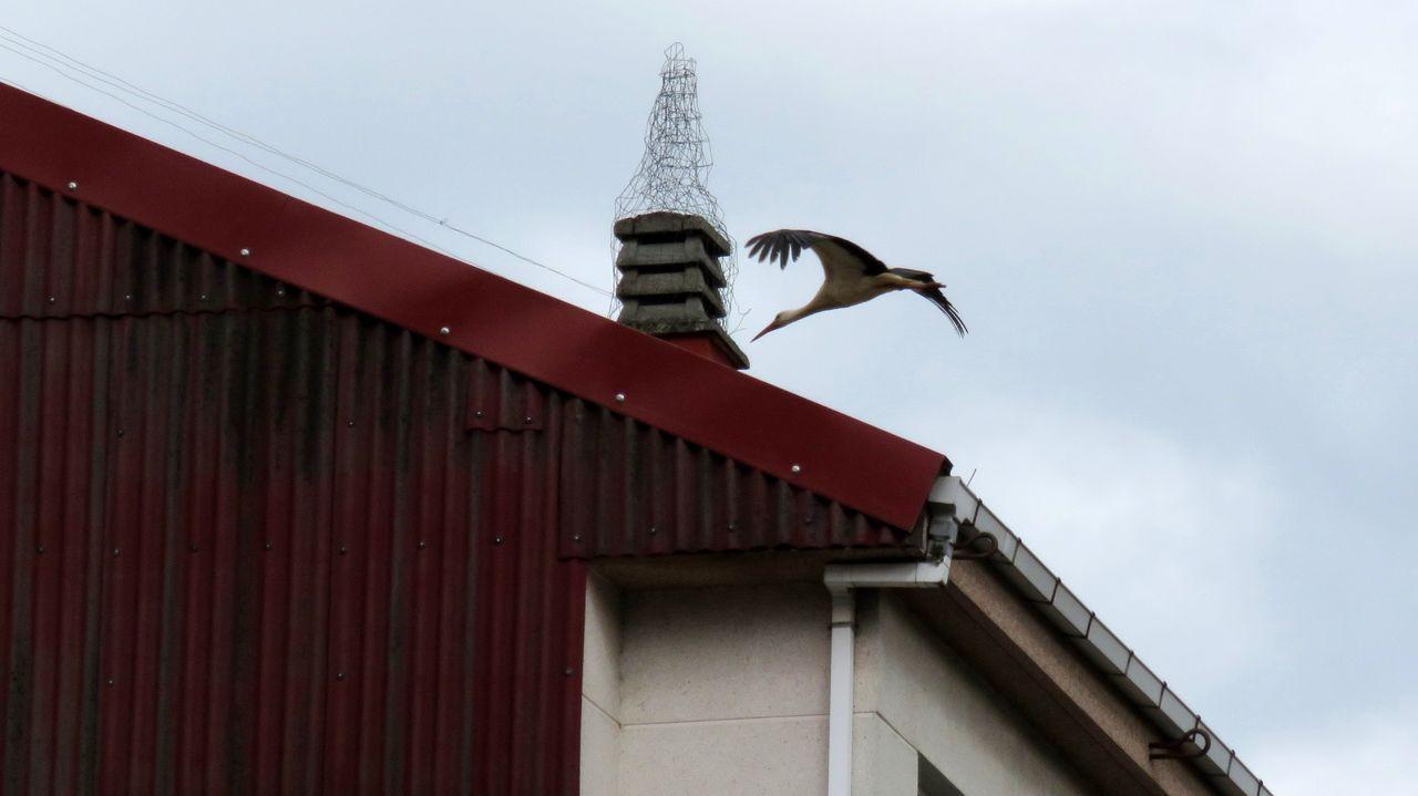 Uno de los artefactos instalados en el casco urbano de Chantada para impedir que las cigüeñas construyan nidos