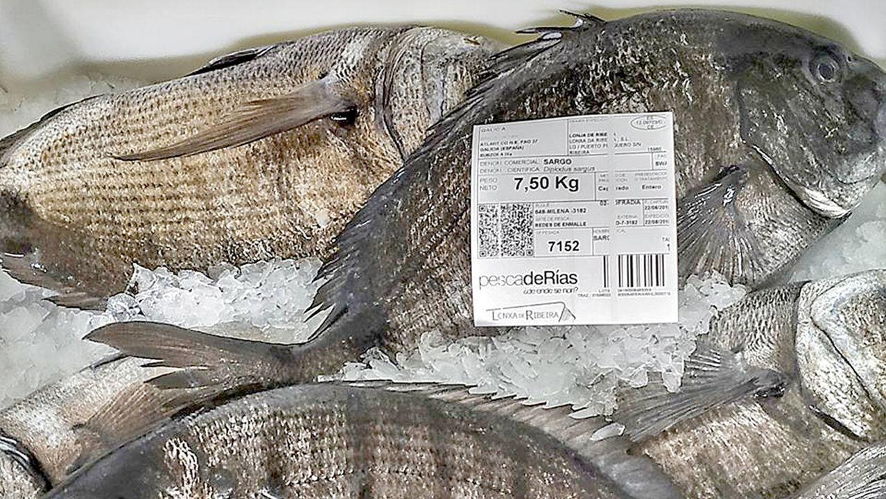 La etiqueta de pescadeRías con la que salen sargos tan vistosos como estos de la lonja, en una foto de archivo