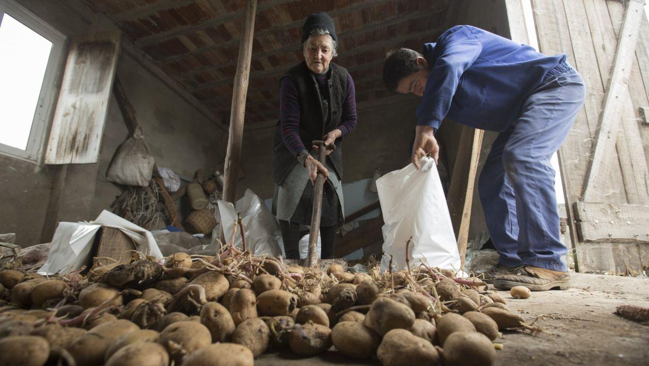 Imagen de archivo de patatas afectadas por la couza guatemalteca