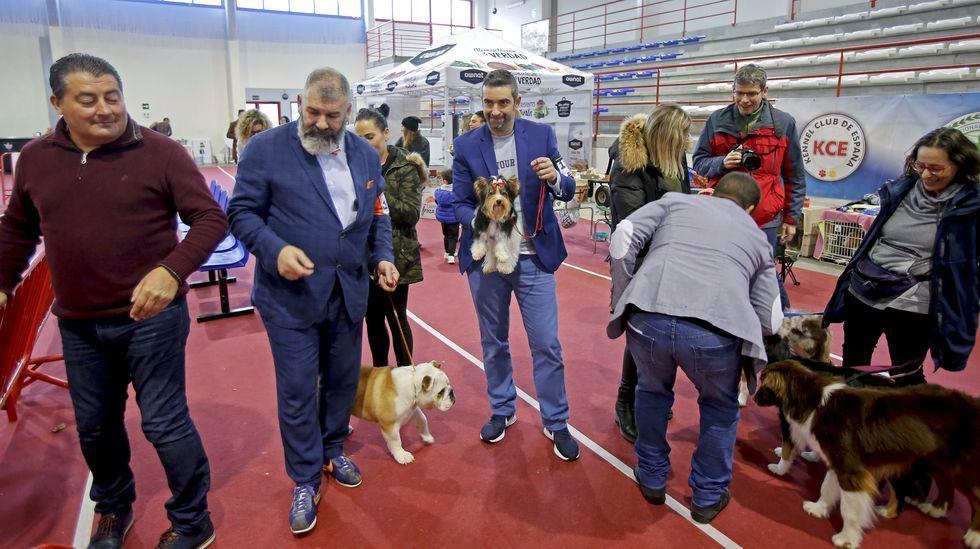 III Exposición Internacional Canina de Ponte Caldelas